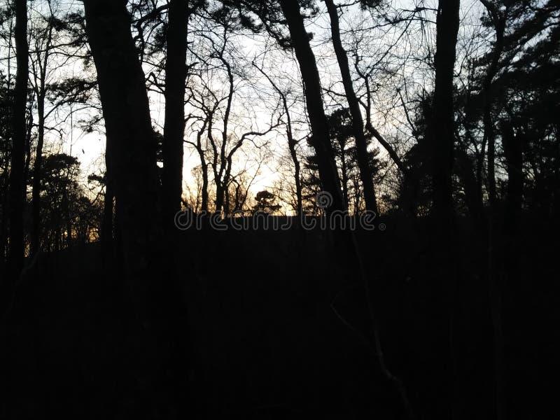 Naturen går i skogen royaltyfria bilder