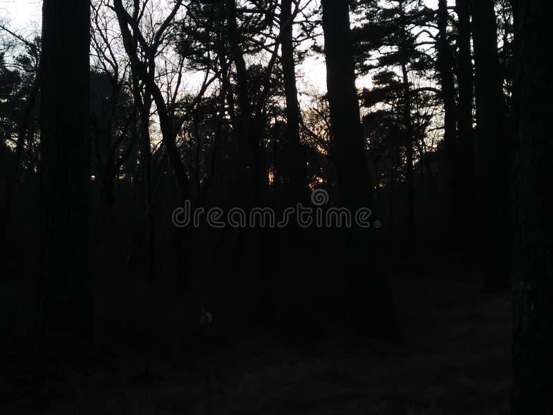 Naturen går i skogen royaltyfri foto