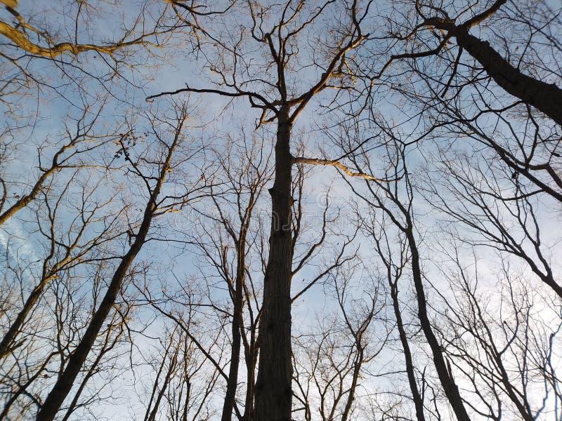 Naturen går i skogen fotografering för bildbyråer