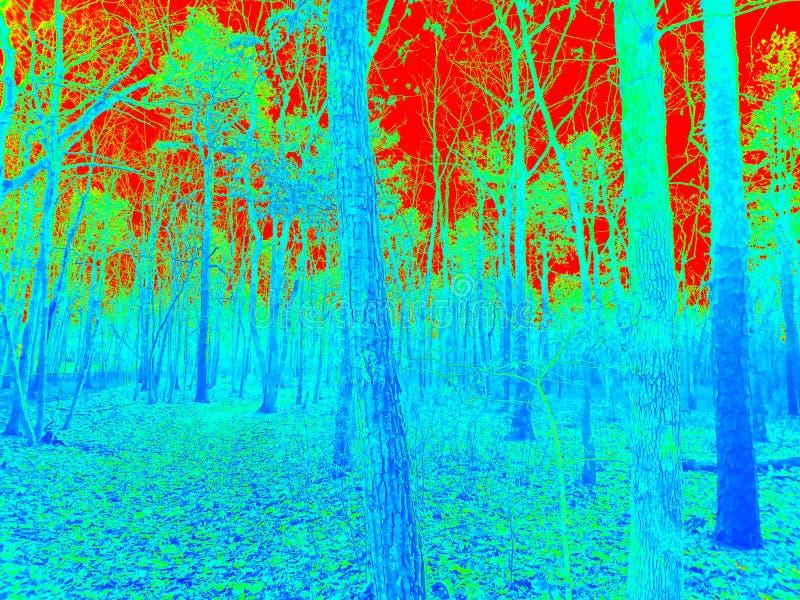 Naturen går i skogen arkivbilder
