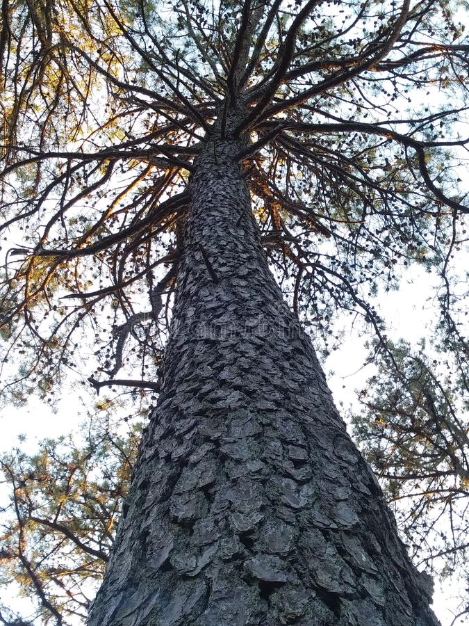Naturen går i skogen royaltyfria foton