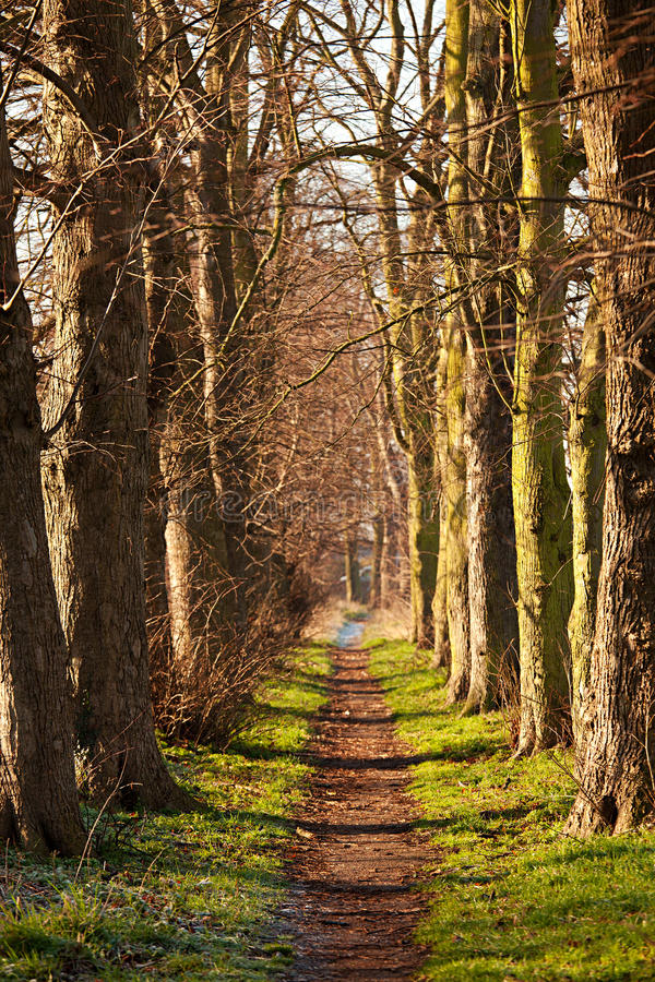 Naturen går tunnelen fotografering för bildbyråer
