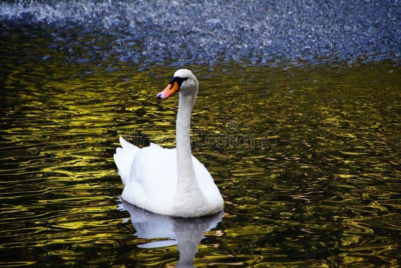 naturen går Tyskland royaltyfri fotografi