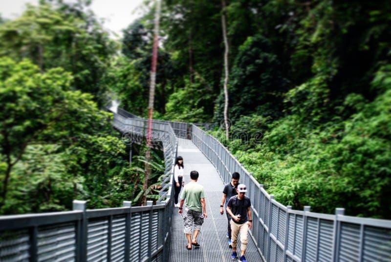 Naturen parkerar @Chaingmai royaltyfria foton
