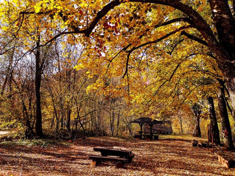 Naturen parkerar Grza nära Paracinen, Serbien fotografering för bildbyråer
