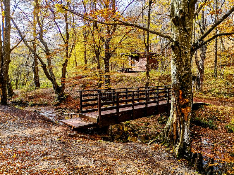 Naturen parkerar Grza nära Paracinen, Serbien arkivfoto
