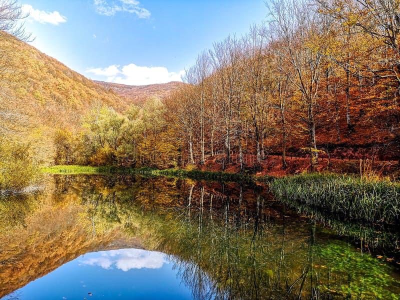 Naturen parkerar Grza nära Paracinen, Serbien arkivfoton