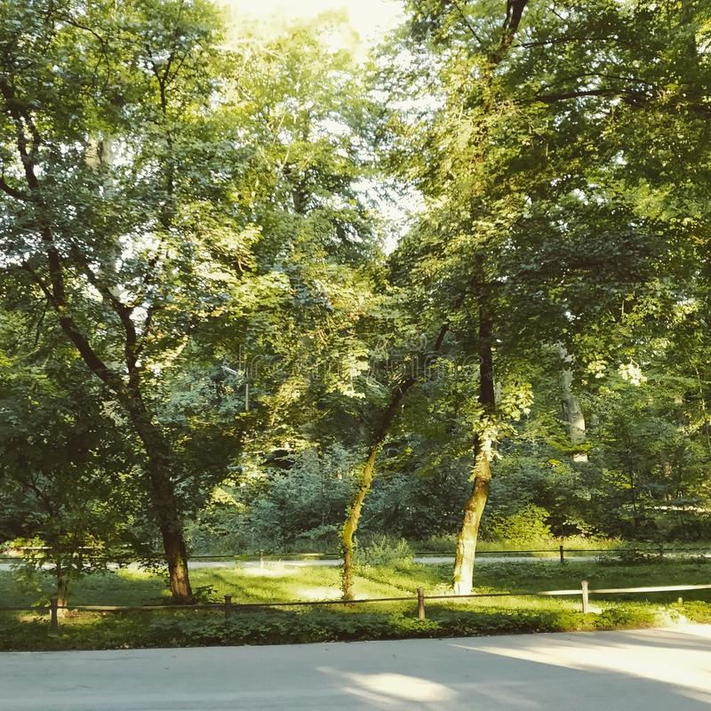 - naturen parkerar utomhus royaltyfri fotografi