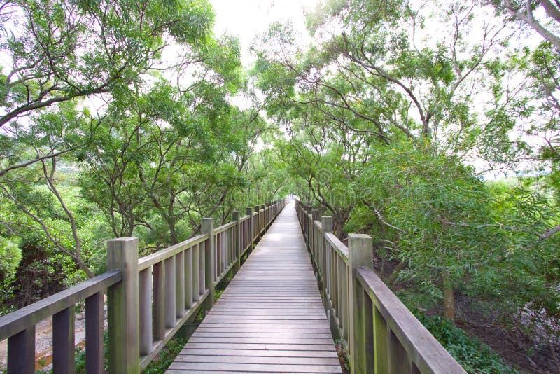 naturen taiwan går trän royaltyfri bild