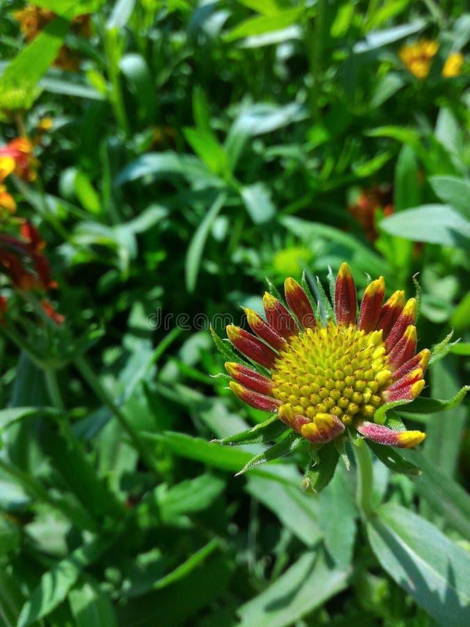 Naturen zoomade fotografering för bildbyråer