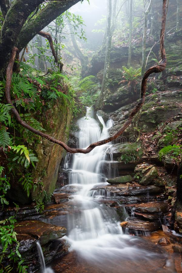 Naturens lekplats är de bästa blåa bergen Australien arkivfoton