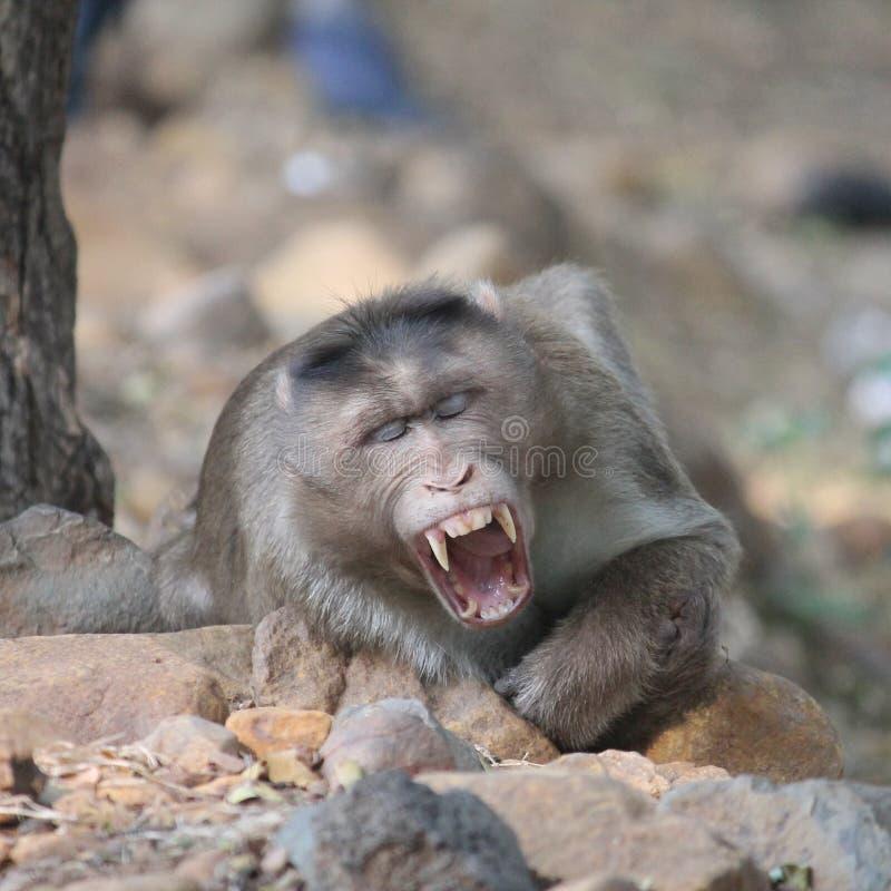 naturephotos05 małpy zwierzę obrazy stock