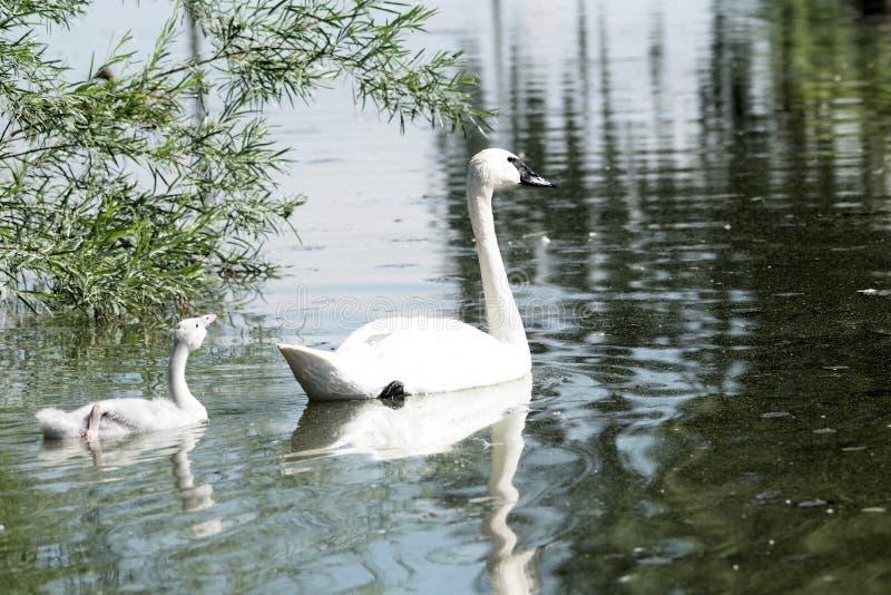 Naturer som bedövar skärm royaltyfri fotografi