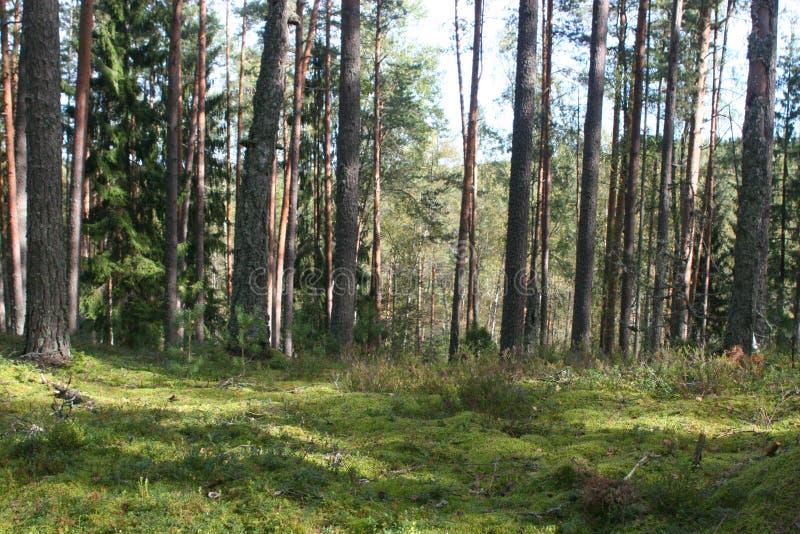 NatureTreesWoodsVegetationBright fotografia de stock