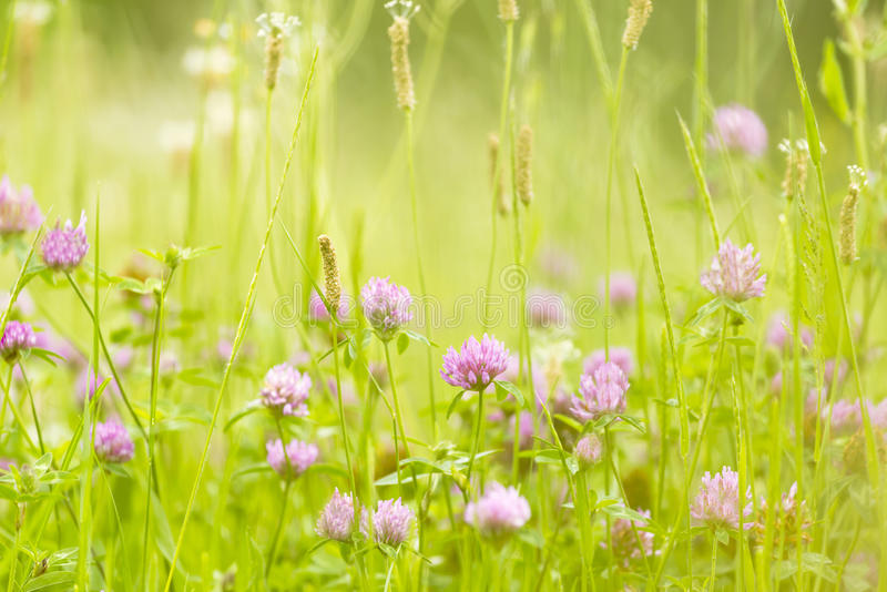 A natureza abstrata floresce a mola e o verão do fundo imagens de stock