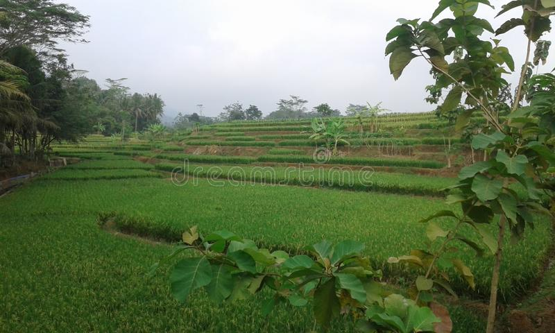 Natureza Banjarnegara imagem de stock royalty free