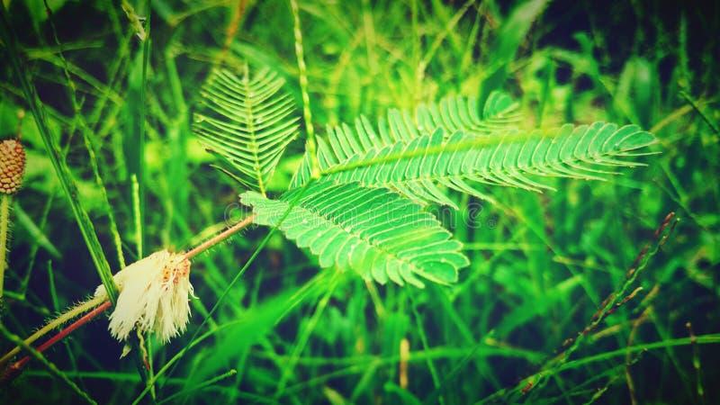 natureza, beleza, perfeita fotografia de stock