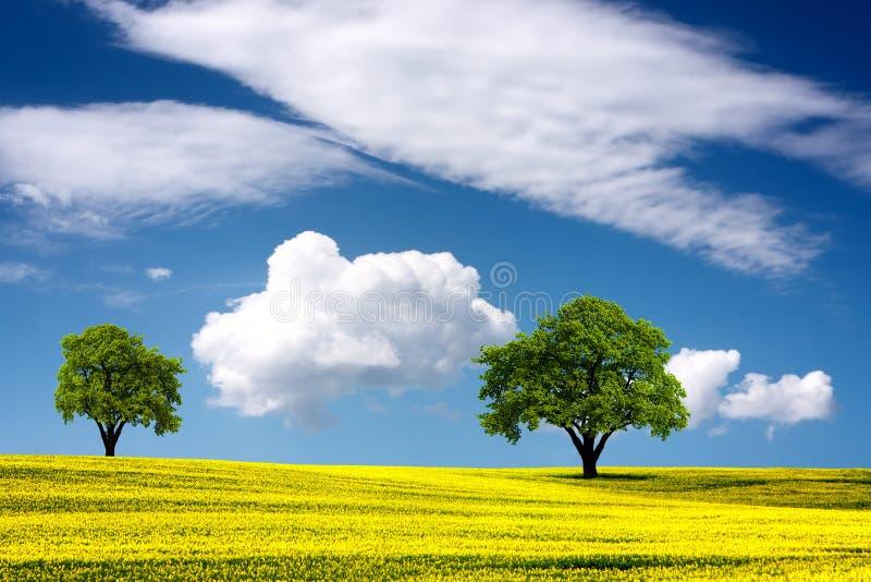 Natureza bonita fotos de stock
