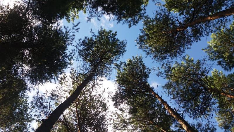 Natureza bonita imagem de stock royalty free