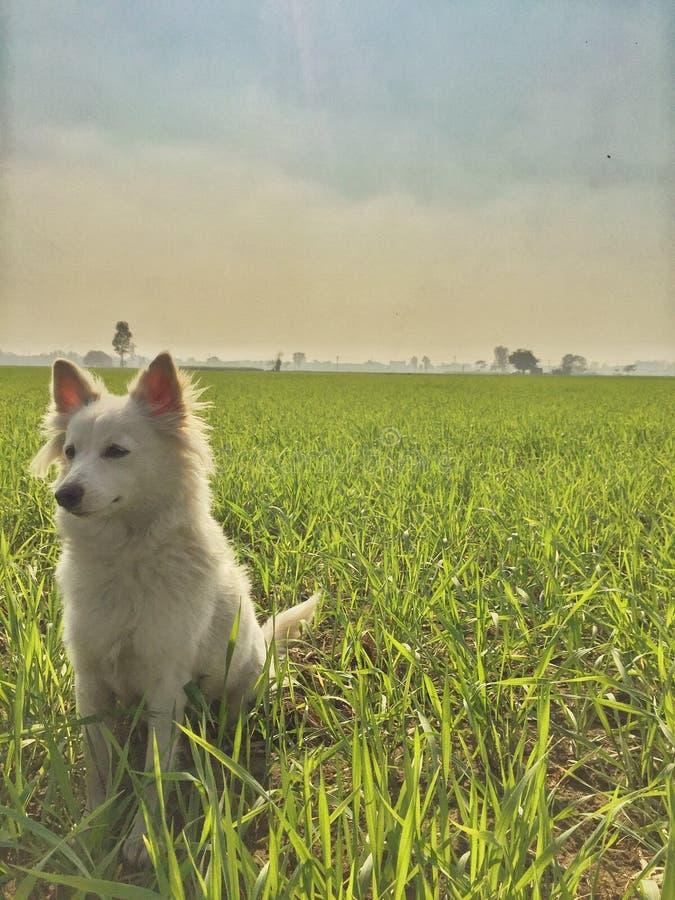 Natureza bonita com cão foto de stock royalty free