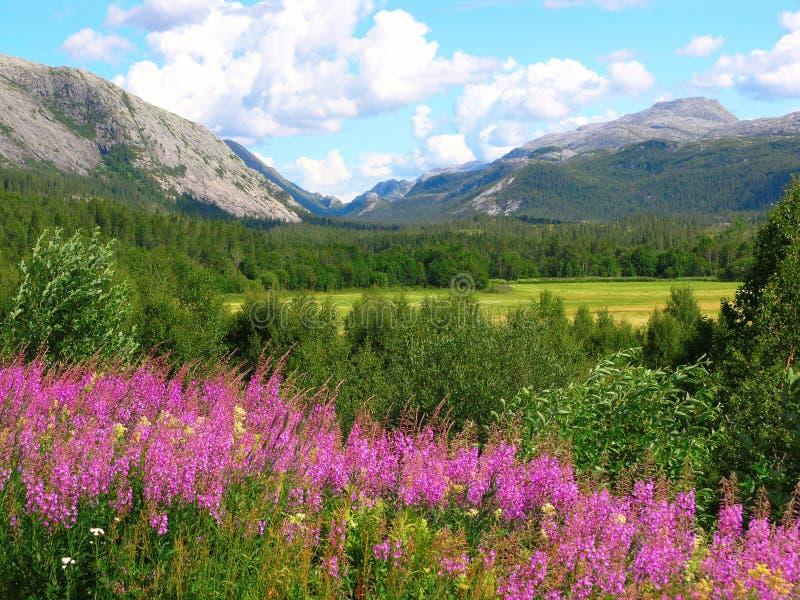 Natureza bonita de Noruega imagens de stock royalty free