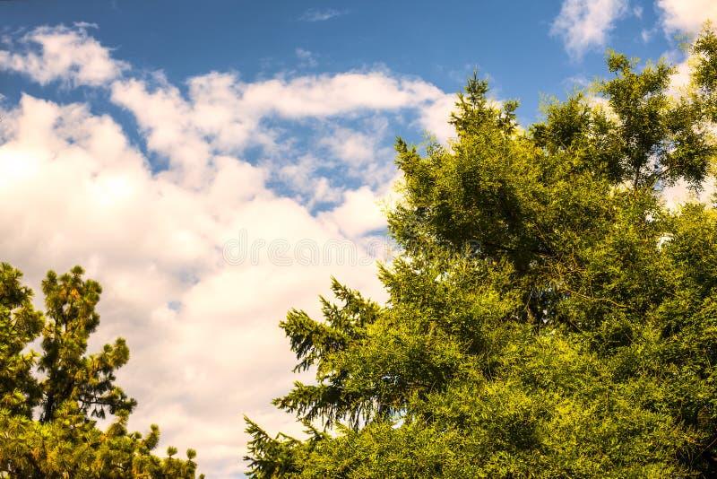 Natureza bonita do céu da árvore fotografia de stock