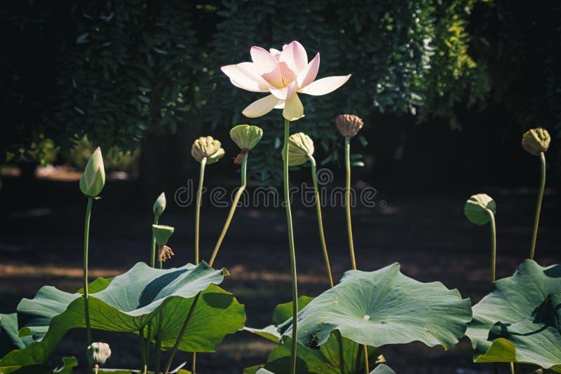 Natureza bonita do verão com flor imagem de stock royalty free