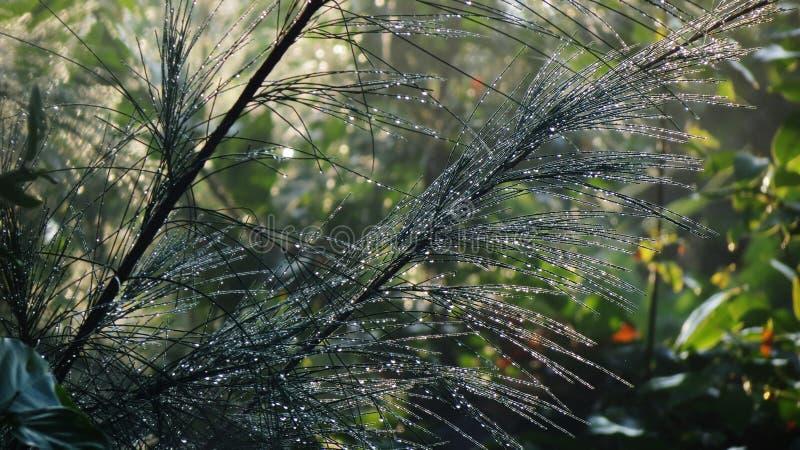 Natureza bonita, gotas de brilho da chuva fotografia de stock