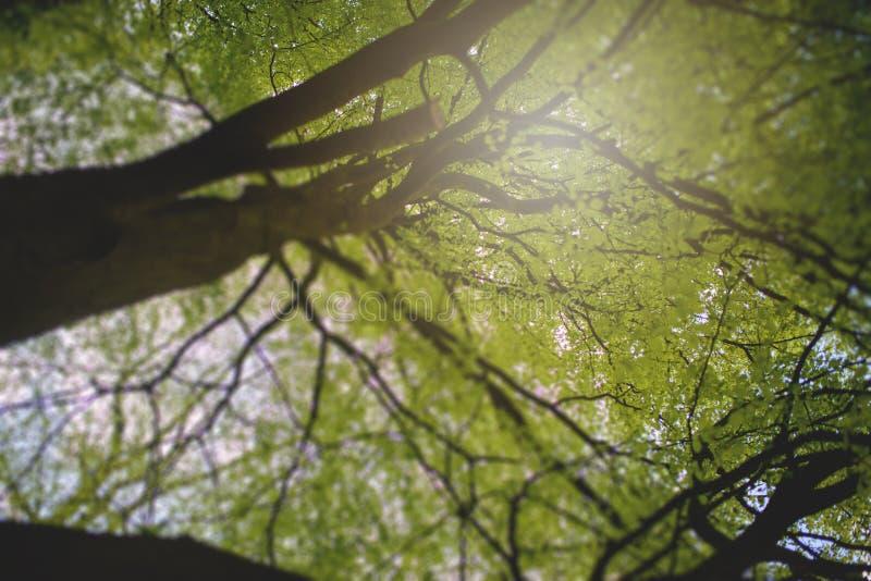 Natureza bonita na manhã na floresta enevoada da mola imagem de stock royalty free