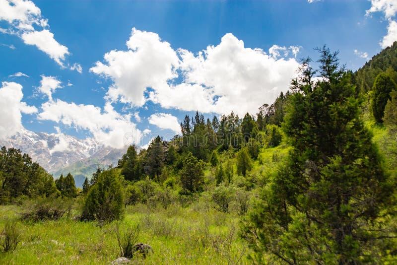 Natureza bonita nos Himalayas na mola fotografia de stock royalty free