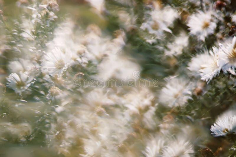 Natureza borrada sumário do fundo fotografia de stock royalty free