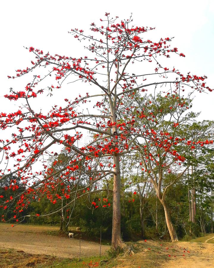 Natureza colorida fotos de stock