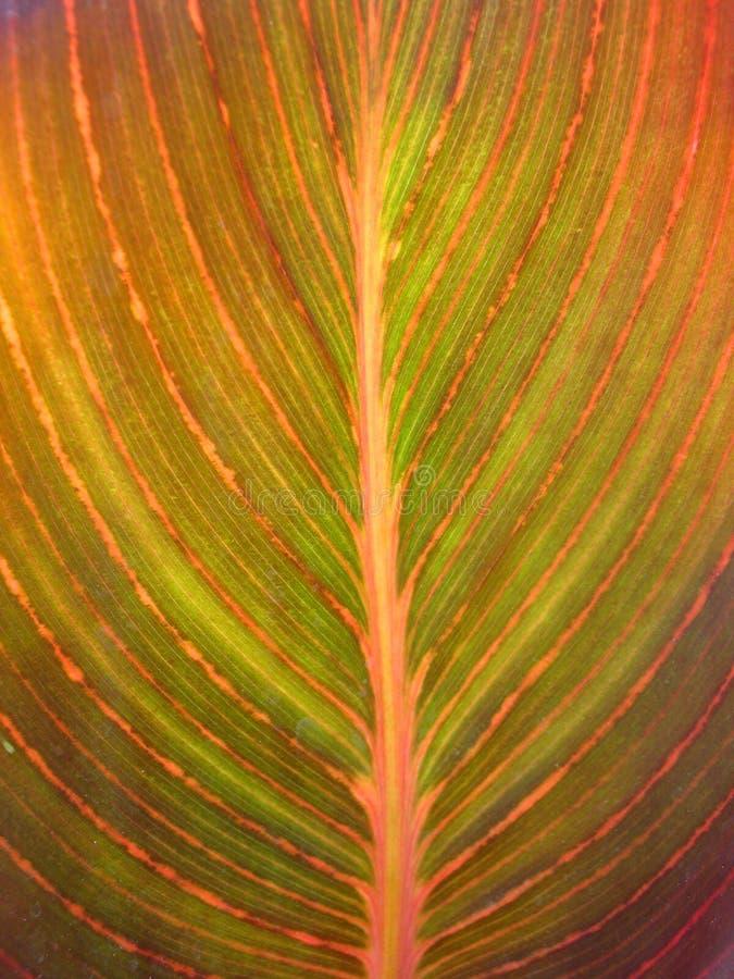 Natureza colorida imagens de stock royalty free