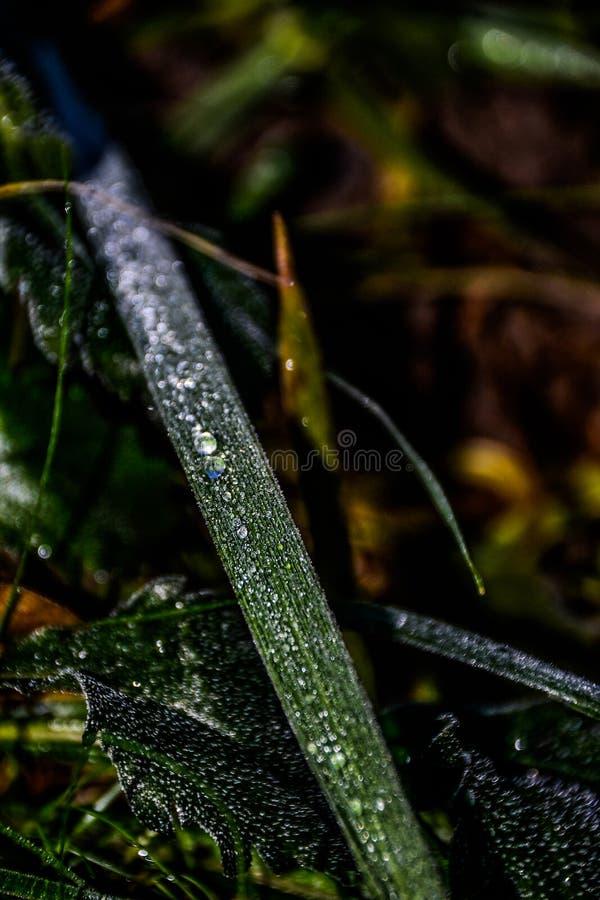 Natureza com aqua foto de stock