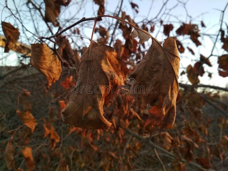 Natureza com seus beleza e capricho fotografia de stock royalty free
