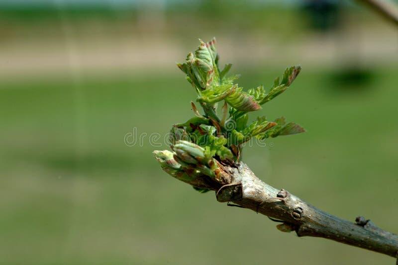 Natureza - começos novos fotografia de stock
