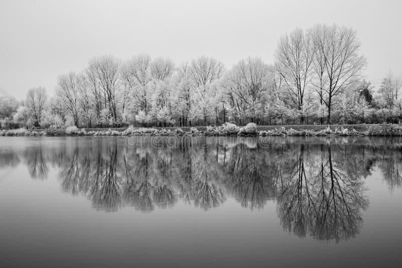 Natureza congelada pelo rio Elbe-Celakovice, representante checo fotografia de stock
