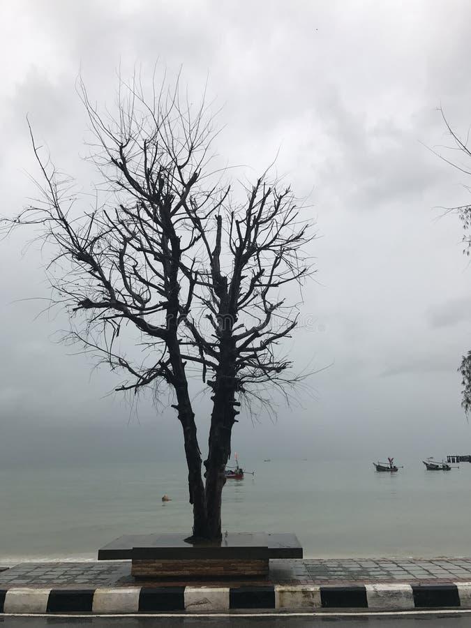 Natureza da árvore do mar fotos de stock