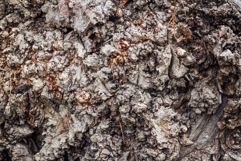 natureza da árvore da textura do marrom do fundo da casca fotos de stock royalty free