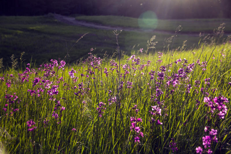 Natureza da beleza da floresta imagens de stock