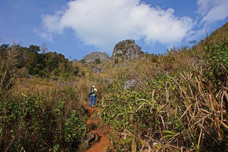 Natureza da estação seca da fuga da floresta tropical do monte, caminhada do turista à parte superior da montanha, Chiang Mai, Ta imagem de stock