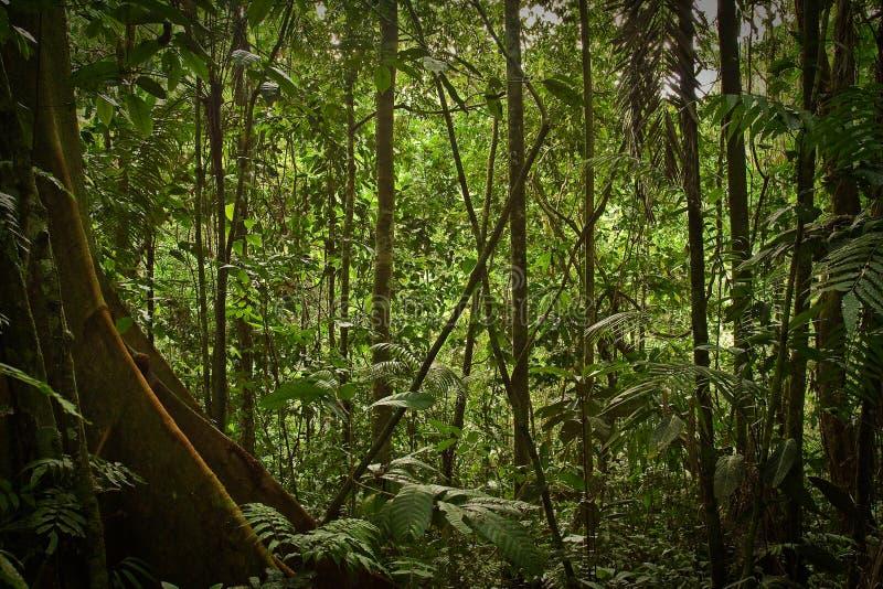 Natureza da floresta úmida, parque nacional de Yasuni, Equador foto de stock