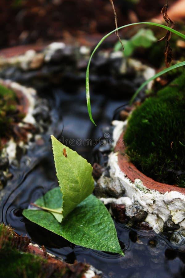 Natureza da fragilidade fotos de stock
