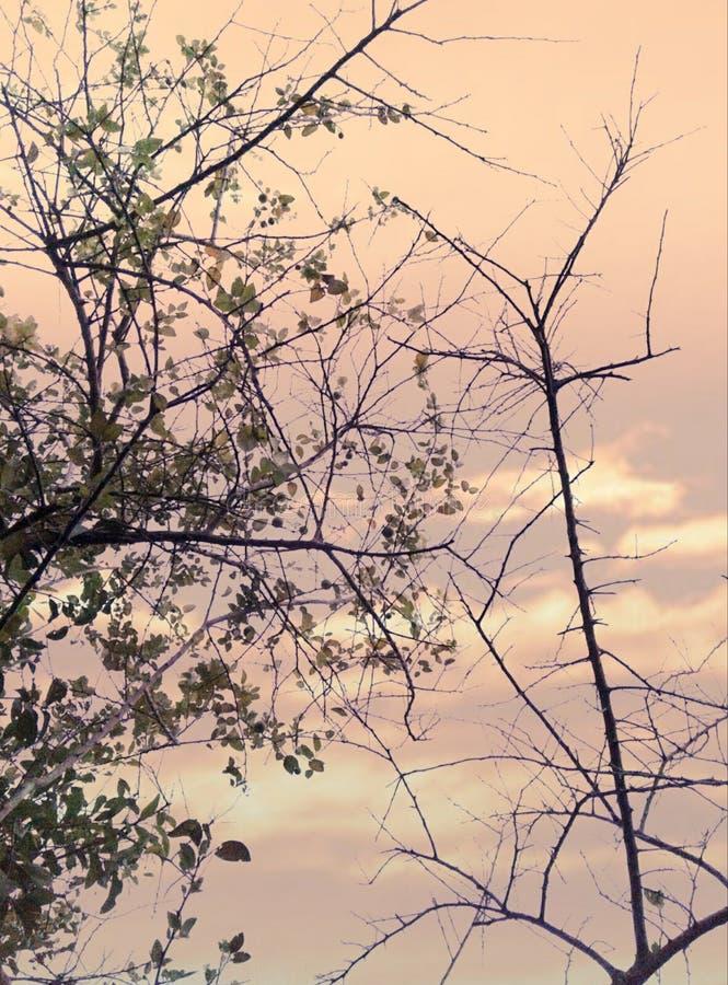 Natureza da luz do sol fotos de stock