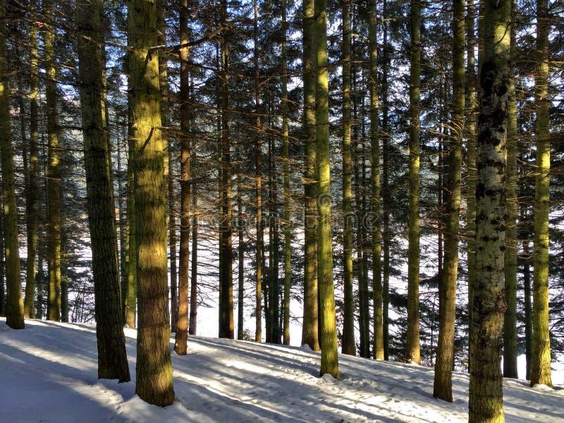 Natureza da neve da árvore imagens de stock