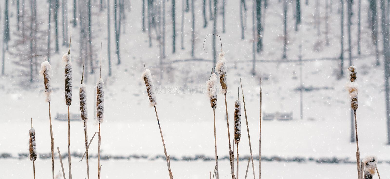 Natureza da neve do inverno Fundo da paisagem invernal com árvores cobertas de neve e rio do gelo Árvores congeladas e sementes imagens de stock