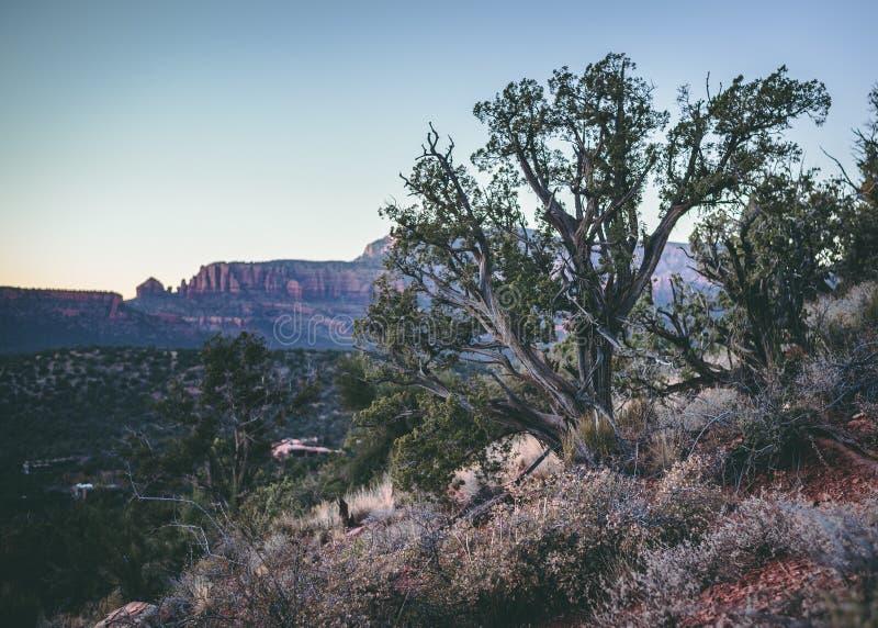Natureza da paisagem das árvores do por do sol do Arizona imagem de stock royalty free
