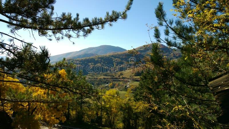 Natureza da Sérvia no outono - folha bonita do outono das árvores no primeiro plano, a coroa dos abeto e montanhas fotos de stock