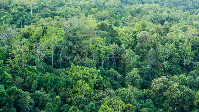 Natureza das árvores de floresta fotografia de stock