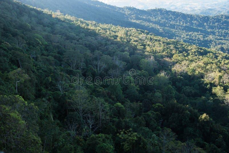 Natureza das árvores de floresta foto de stock royalty free